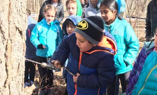 Maple Sugaring at Cass Benton Park